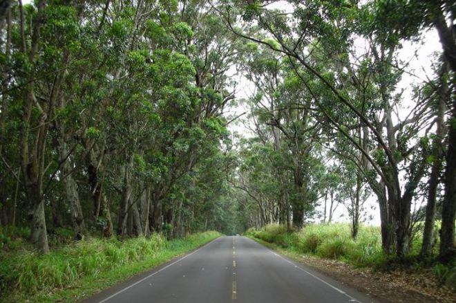 poipu tree tunnel