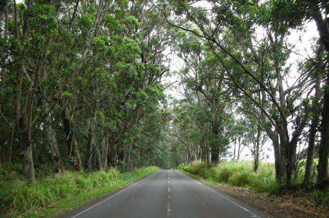 poipu tree tunnel